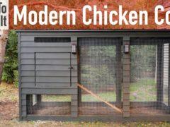 Modern DIY Backyard Chicken Coop Ideas